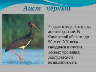 Аист чёрный Редкая птица из отряда аистообразные. В Самарской области до 90-