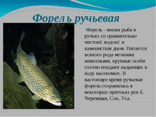 Форель ручьевая Форель - жилая рыба в ручьях со сравнительно чистою̆ водою̆ и