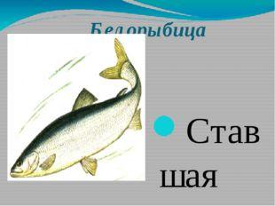 Белорыбица Ставшая очень редкой в водоемах Самарской области рыба. В результ