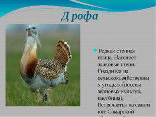 Дрофа Редкая степная птица. Населяет злаковые степи. Гнездится на сельскохозя