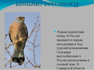 Пустельга степная Редкая перелётная птица. В России признается видом, находя