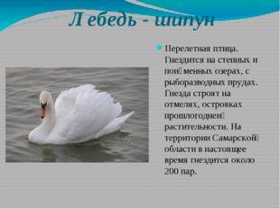 Лебедь - шипун Перелетная птица. Гнездится на степных и пойменных озерах, с