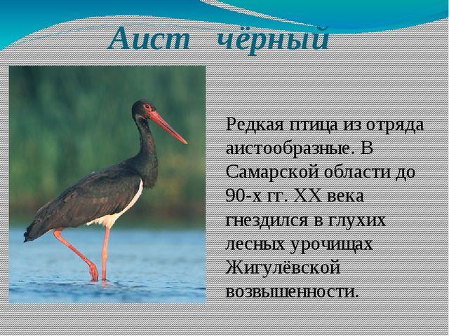 Аист чёрный Редкая птица из отряда аистообразные. В Самарской области до 90-...
