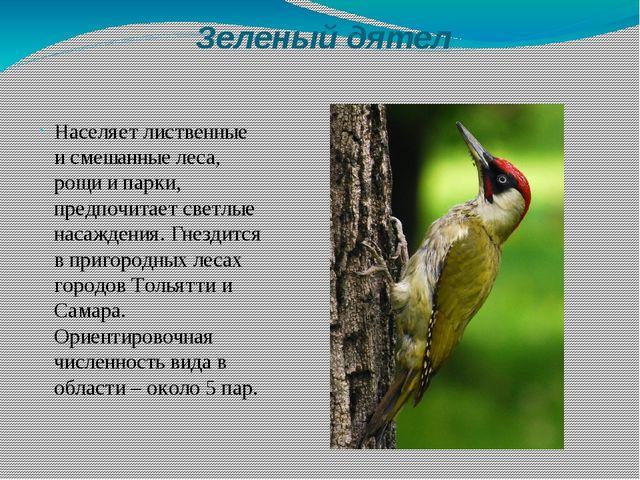 Зеленый дятел Населяет лиственные и смешанные леса, рощи и парки, предпочитае...