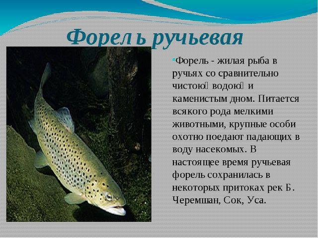 Форель ручьевая Форель - жилая рыба в ручьях со сравнительно чистою̆ водою̆ и...