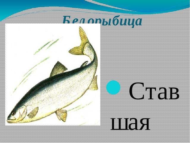 Белорыбица Ставшая очень редкой в водоемах Самарской области рыба. В результ...