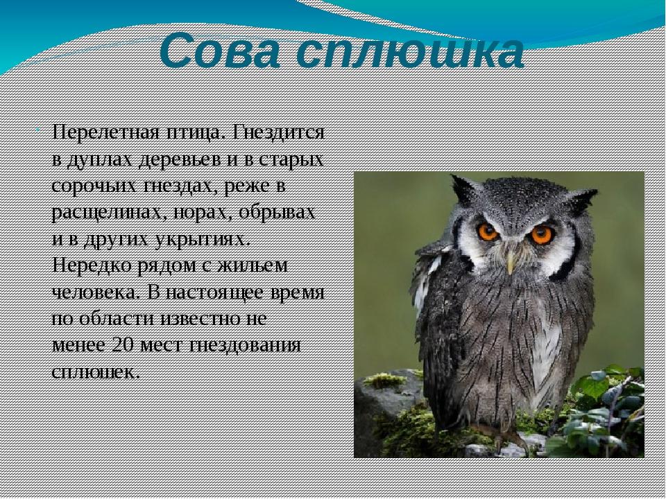 Фото животных из красной книги сова описание