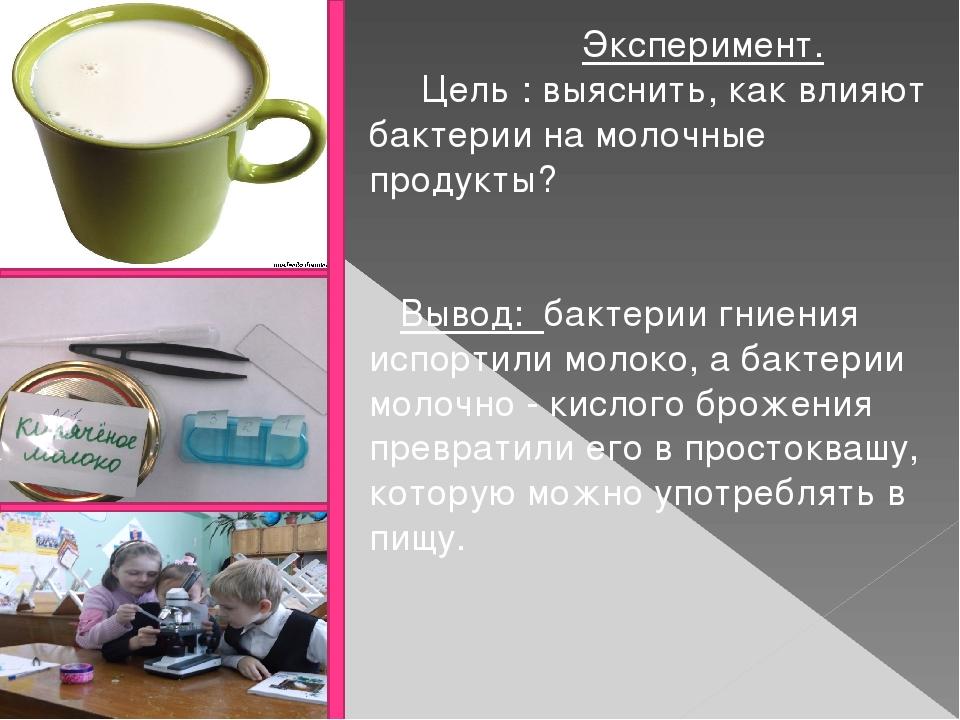 Эксперимент. Цель : выяснить, как влияют бактерии на молочные продукты? Выво...