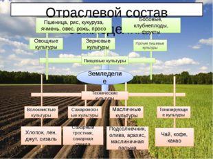 Отраслевой состав земледелия Земледелие Пищевые культуры Технические культур