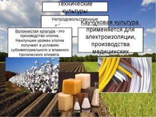 Непродовольственные Волокнистая культура - это производство хлопка. Наилучшие