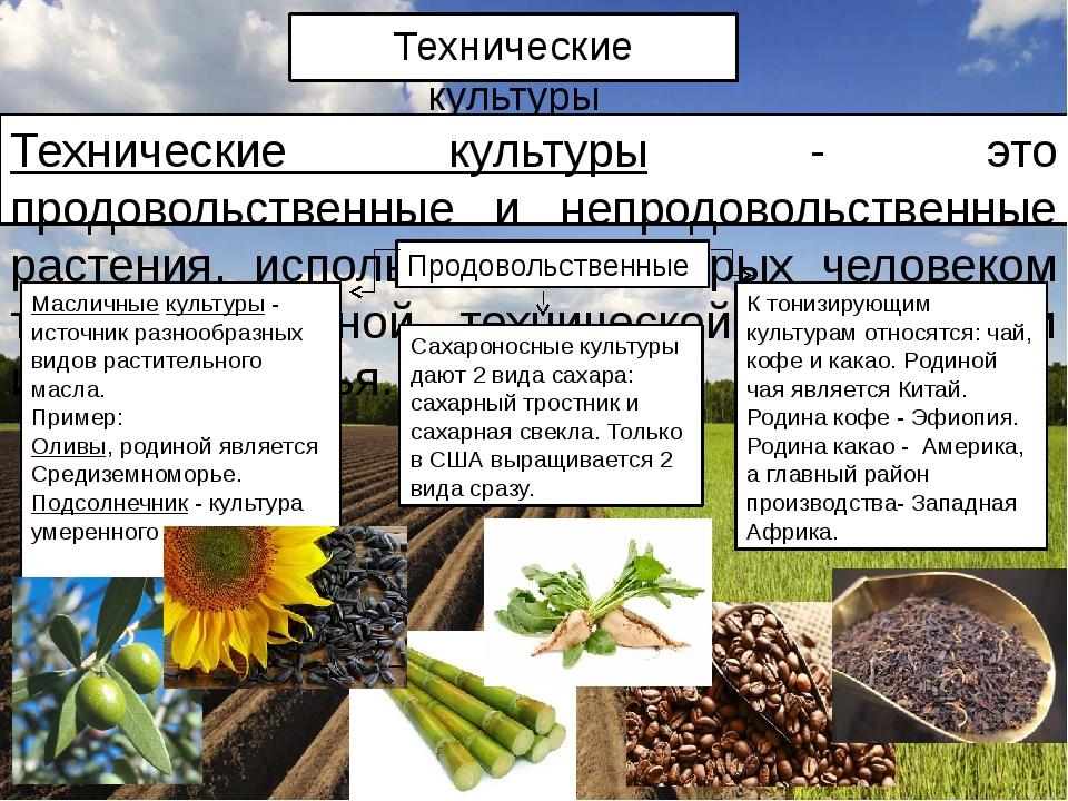 Технические культуры Технические культуры - это продовольственные и непродово...