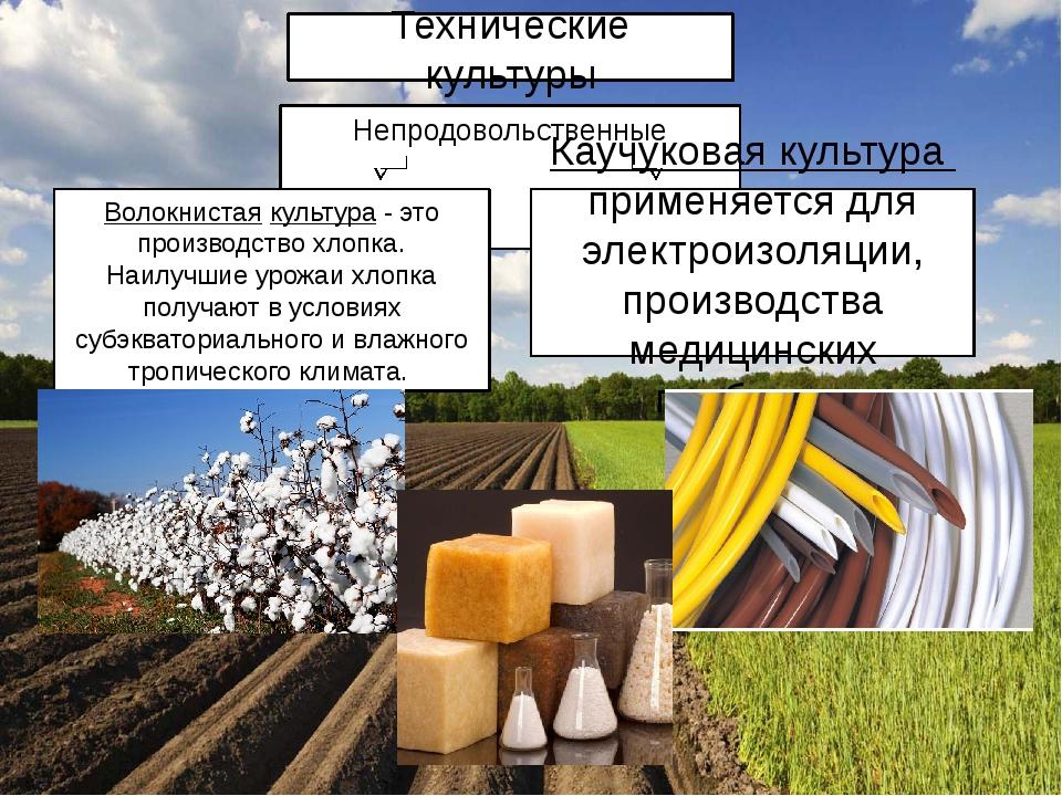 Непродовольственные Волокнистая культура - это производство хлопка. Наилучшие...