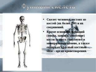 Скелет человека состоит из костей (их более 200) и их соединений. Кроме основ
