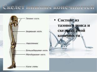 Состоит из тазового пояса и скелета самой конечности