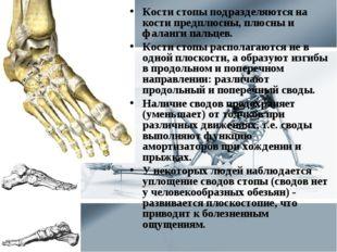 Кости стопы подразделяются на кости предплюсны, плюсны и фаланги пальцев. Кос