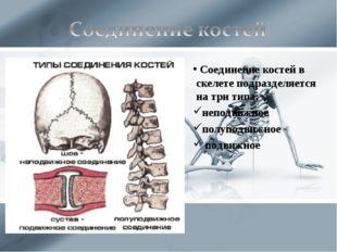 Соединение костей в скелете подразделяется на три типа: неподвижное полуподв