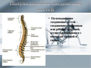 Полуподвижное соединение костей – соединением позвонков или рёбер с грудиной