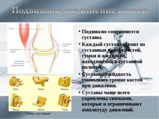Подвижно соединяются суставы. Каждый сустав состоит из суставных поверхностей