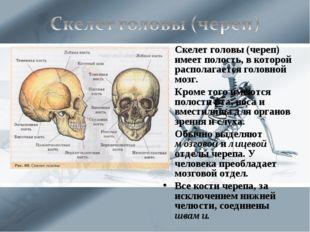 Скелет головы (череп) имеет полость, в которой располагается головной мозг. К