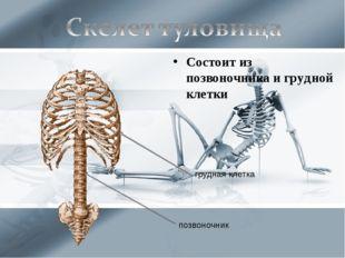 Состоит из позвоночника и грудной клетки грудная клетка позвоночник