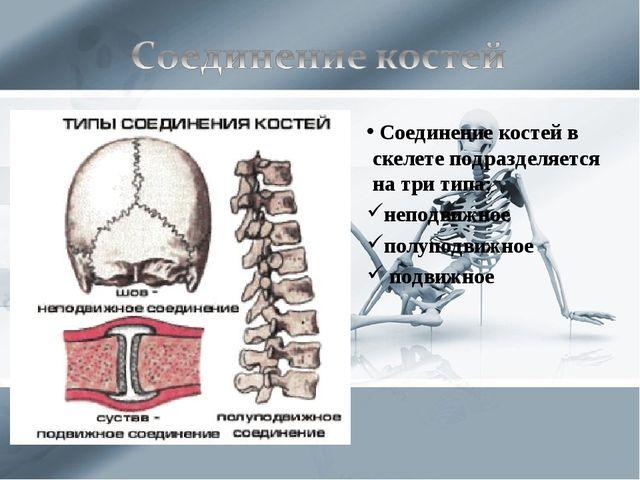 Соединение костей в скелете подразделяется на три типа: неподвижное полуподв...