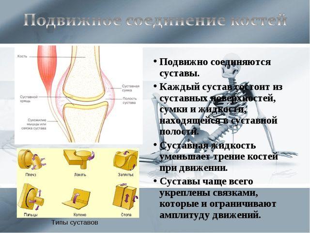 Подвижно соединяются суставы. Каждый сустав состоит из суставных поверхностей...