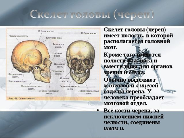 Скелет головы (череп) имеет полость, в которой располагается головной мозг. К...