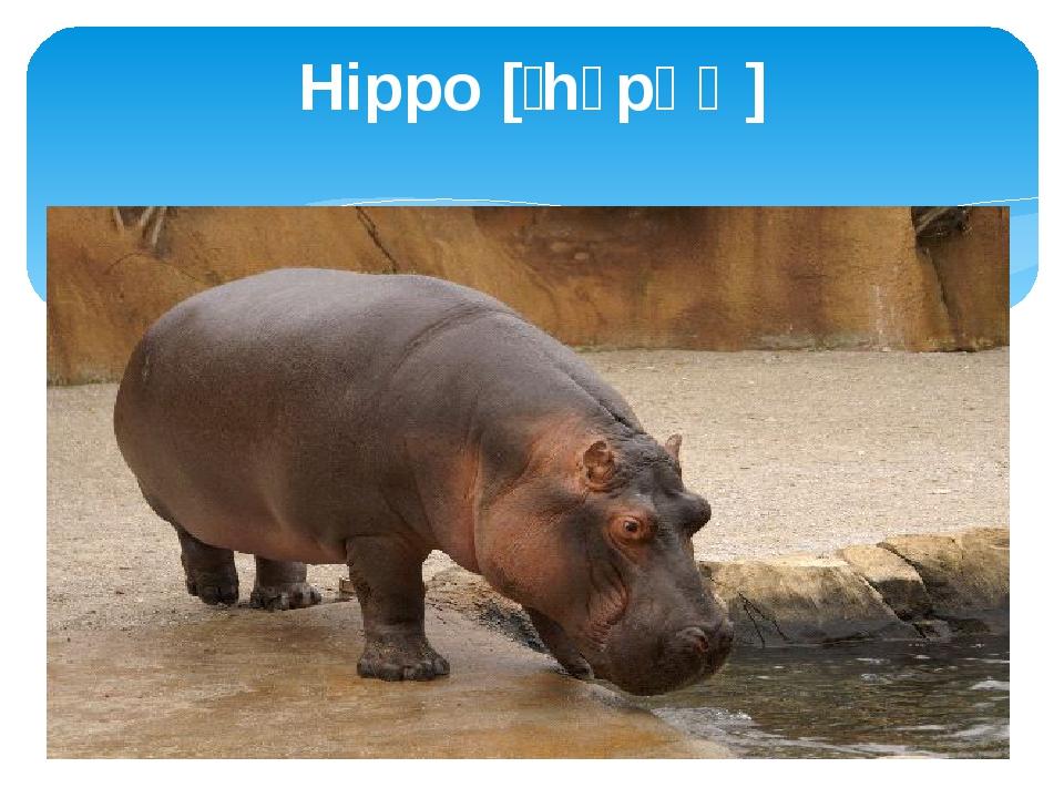 Hippo [ˈhɪpəʊ]