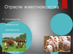 Отрасли животноводства : Скотоводство овцеводство свиноводство Коневодство ол