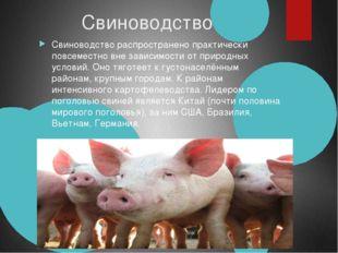 Свиноводство Свиноводство распространено практически повсеместно вне зависи