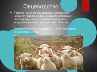 Овцеводство Распространение овцеводства определено неприхотливостью этих до