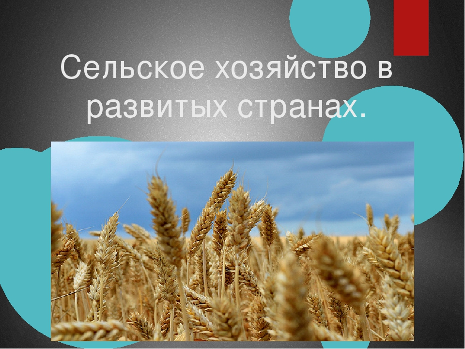 Сельское хозяйство в развитых странах.