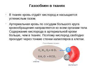 Газообмен в тканях В тканях кровь отдаёт кислород и насыщается углекислым газ
