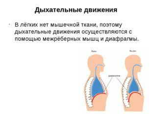 Дыхательные движения В лёгких нет мышечной ткани, поэтому дыхательные движени