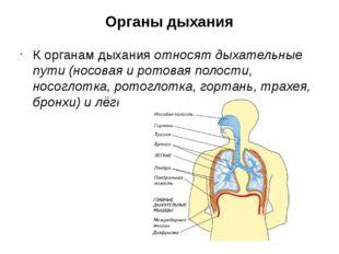 Органы дыхания К органам дыхания относят дыхательные пути (носовая и ротовая