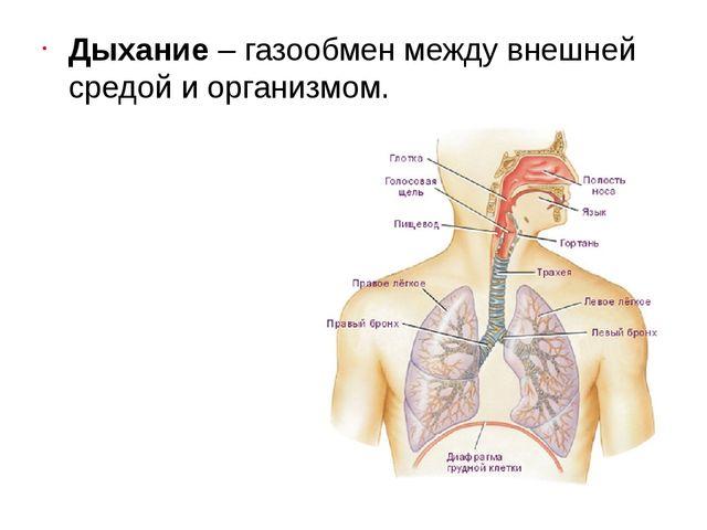 Дыхание– газообмен между внешней средой и организмом.