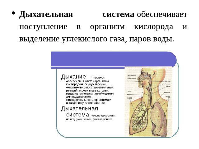 Дыхательная системаобеспечивает поступление в организм кислорода и выделение...