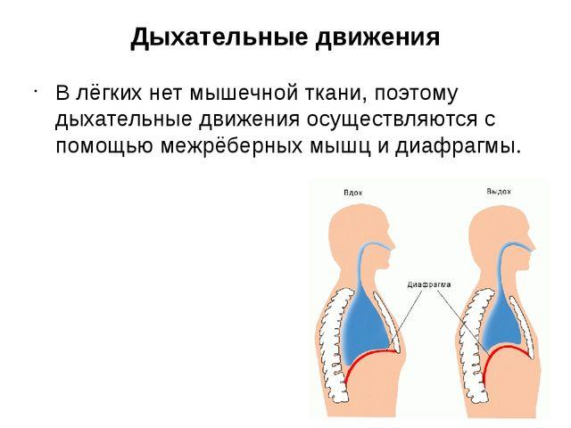 Дыхательные движения В лёгких нет мышечной ткани, поэтому дыхательные движени...