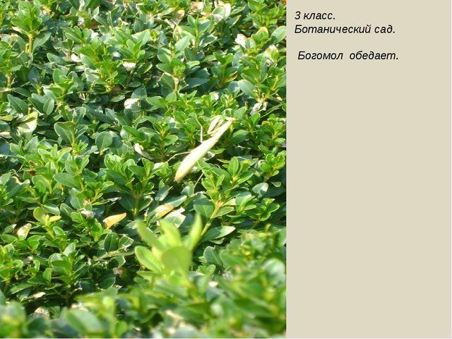 3 класс. Ботанический сад. Богомол обедает.