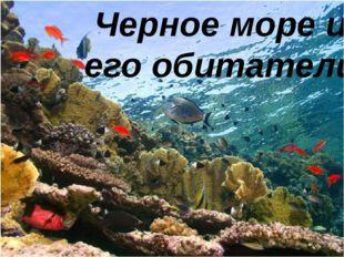 Черное море и его обитатели
