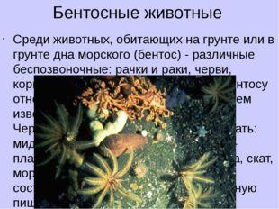 Бентосные животные Среди животных, обитающих на грунте или в грунте дна морск