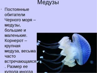 Медузы Постоянные обитатели Черного моря – медузы, большие и маленькие. Корне