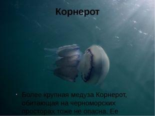 Корнерот Более крупная медуза Корнерот, обитающая на черноморских просторах т