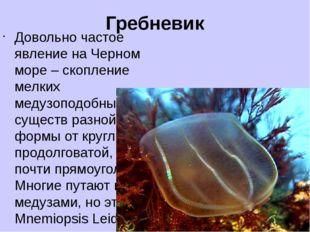 Гребневик Довольно частое явление на Черном море – скопление мелких медузопод