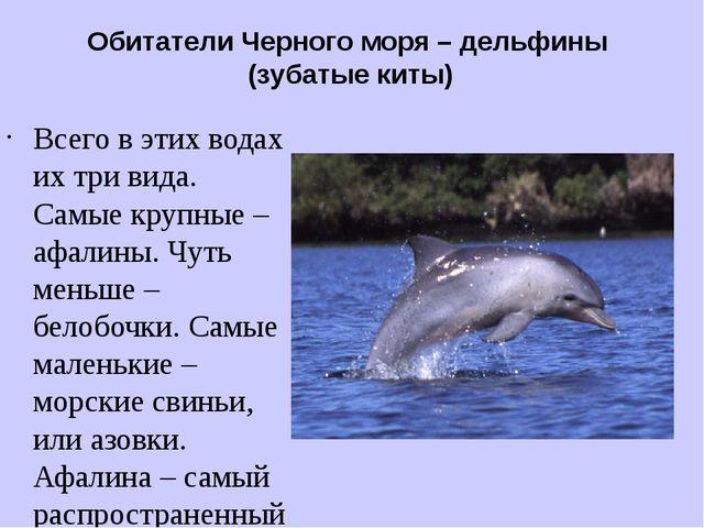 Обитатели Черного моря – дельфины (зубатые киты) Всего в этих водах их три ви...