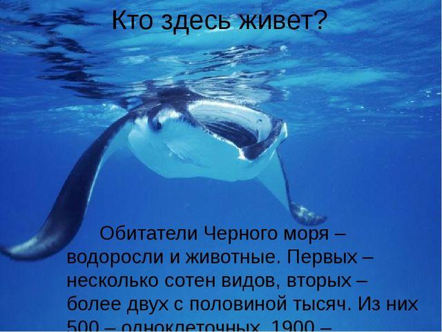 Кто здесь живет? Обитатели Черного моря – водоросли и животные. Первых – неск...