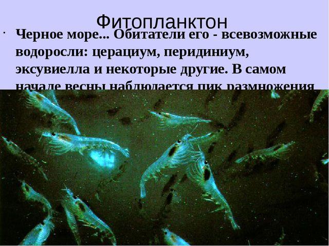 Фитопланктон Черное море... Обитатели его - всевозможные водоросли: церациум,...