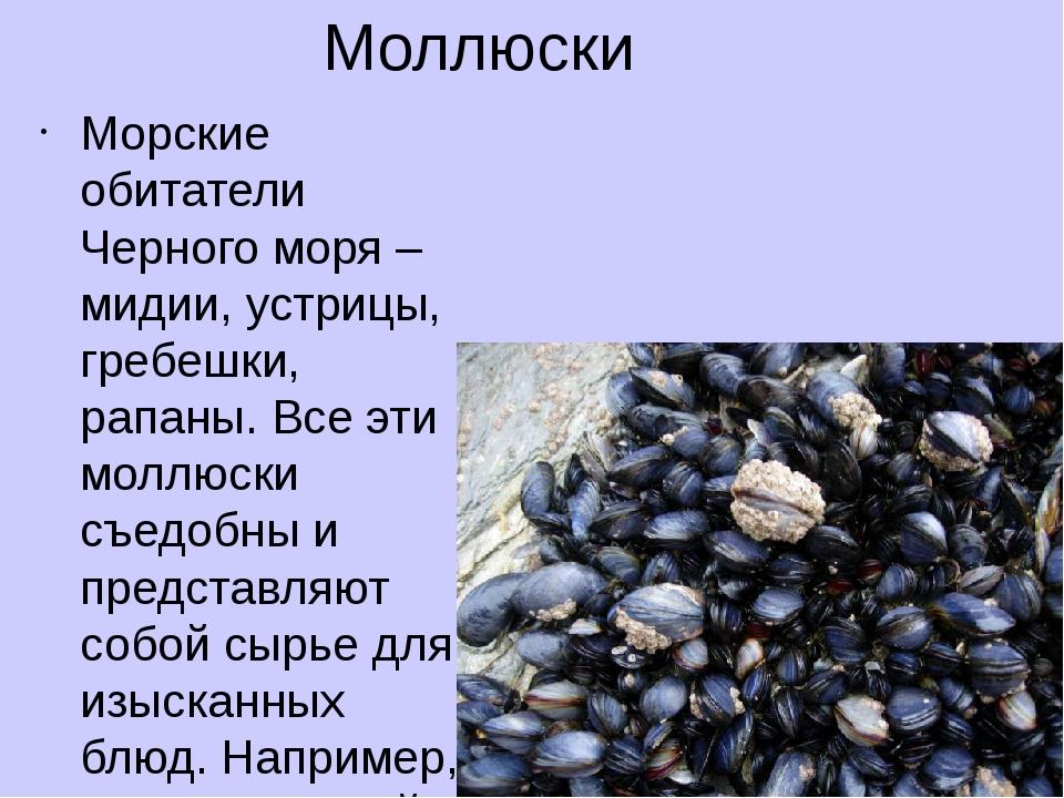 Моллюски Морские обитатели Черного моря – мидии, устрицы, гребешки, рапаны. В...