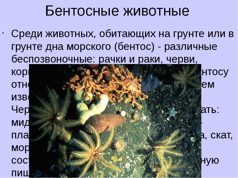 Бентосные животные Среди животных, обитающих на грунте или в грунте дна морск...