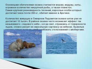 Основными обитателями океана считаются моржи, медузы, киты, огромное количест